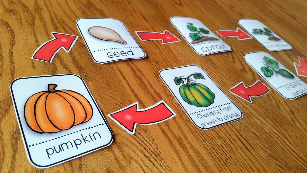 Life cycle of a pumpkin activitiy