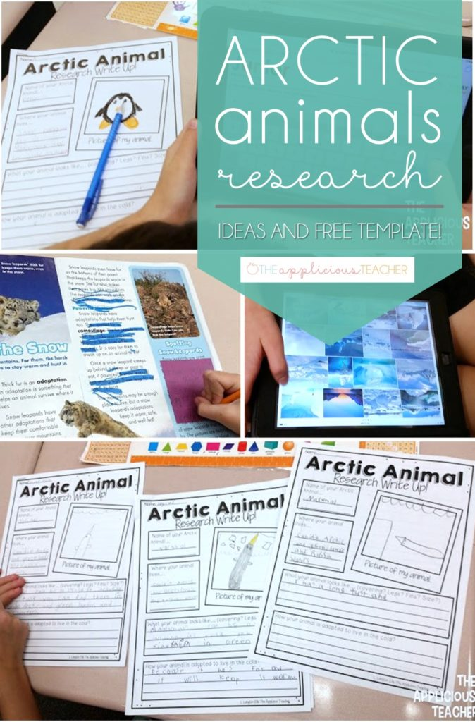 Arctic animals research write up template. Love this free animal reserach template! Perfect for beginning researchers. So many other great ideas too! Theapplicousteacher.com