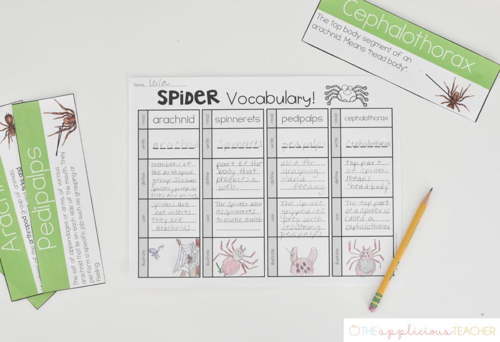 spider vocabulary activity: vocabulary read and do
