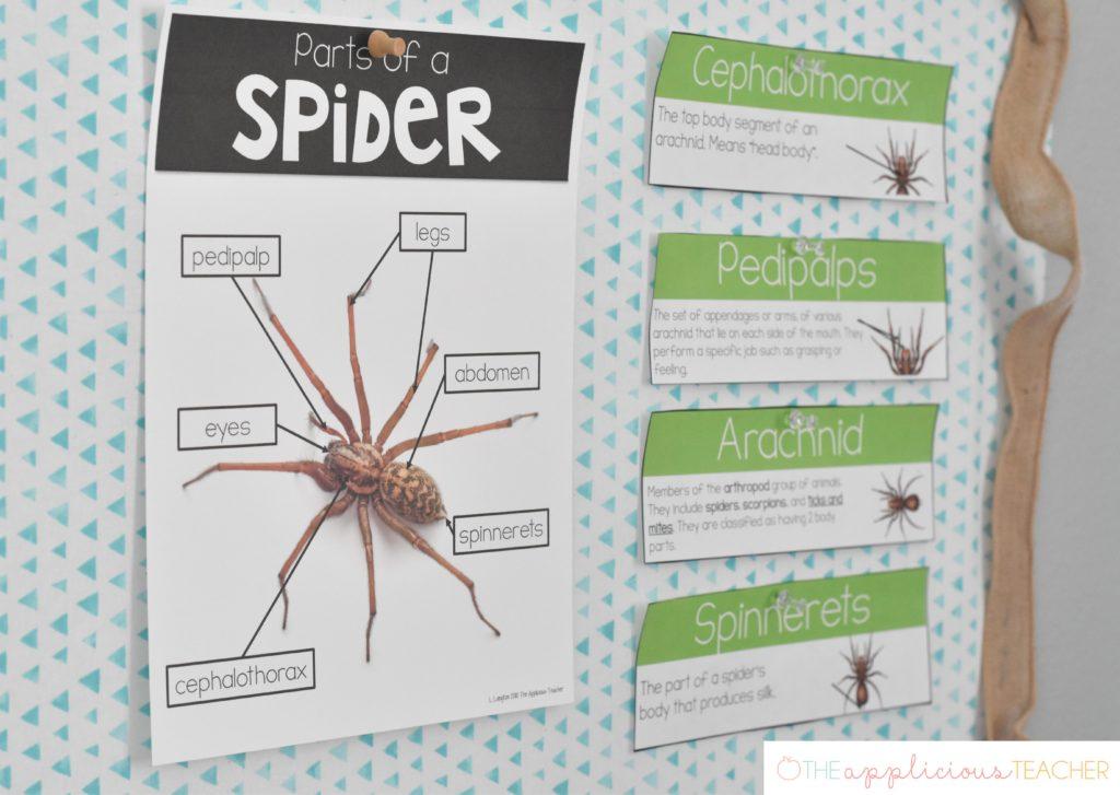 spider anatomy poster spider unit